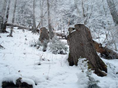 Schutzwald_Winter_Schatz